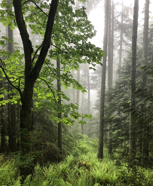 2021_adfam_forestbathing_inset1.jpg